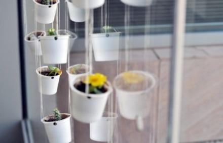 kcup-plantes